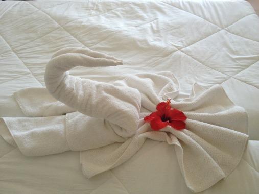 swan-200461_1920