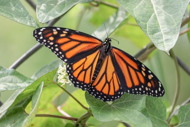 butterfly-3662094_1920