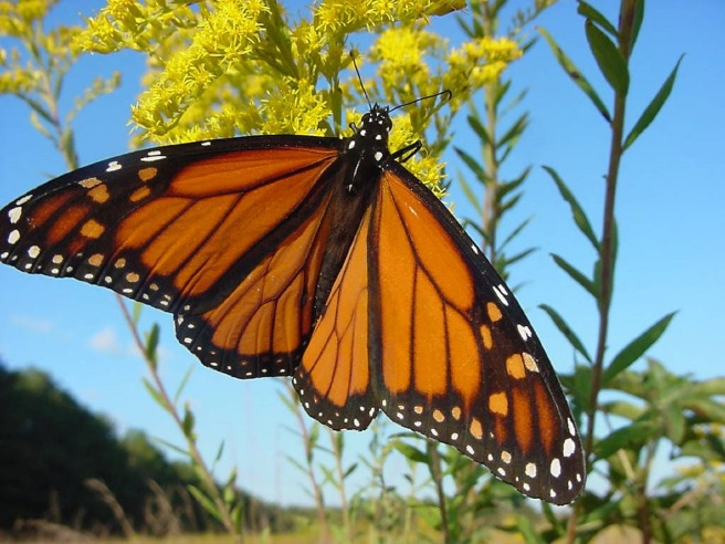 butterfly-680348_1280