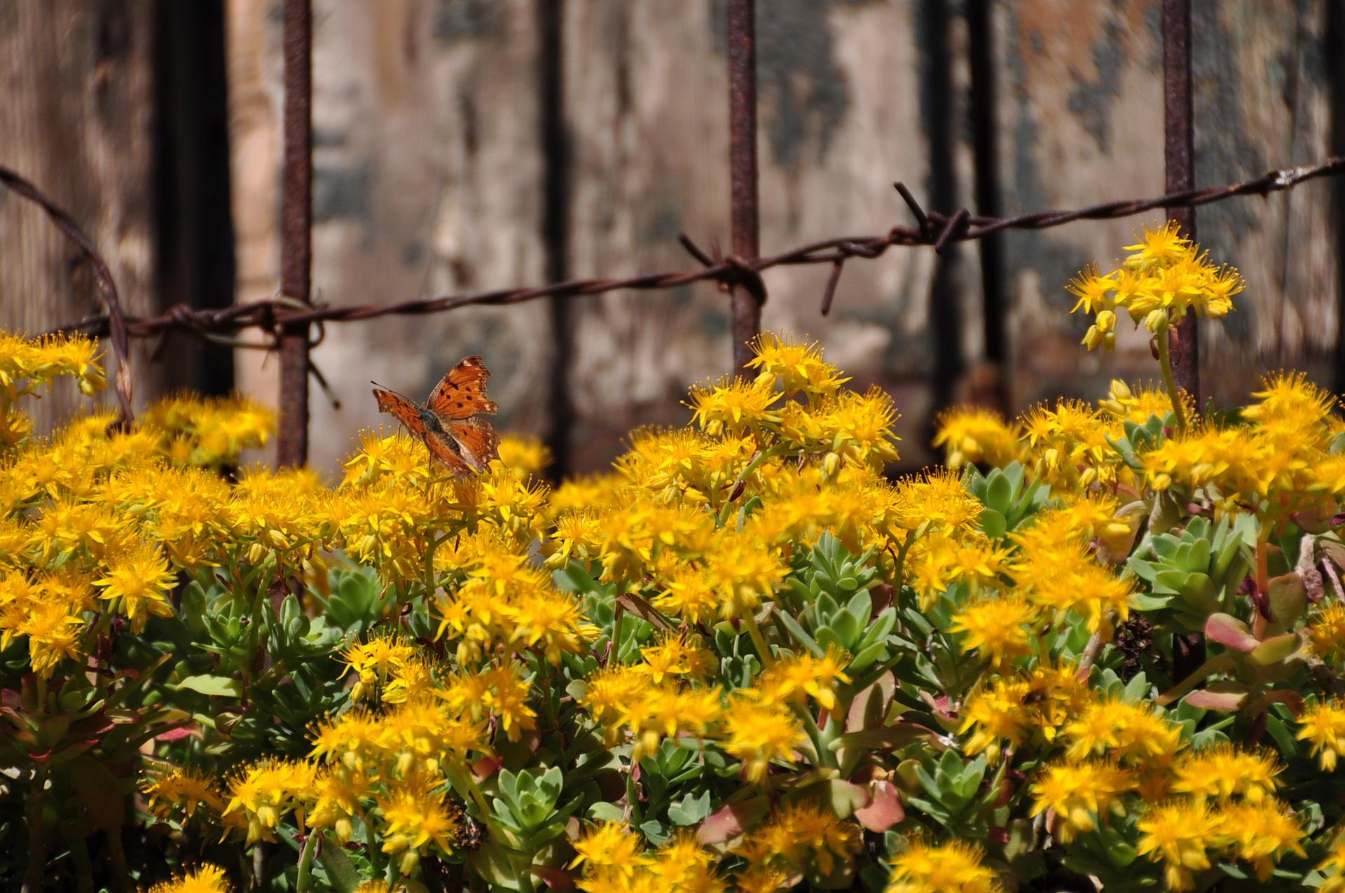 flower-3275534_1920